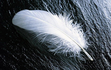 feather9